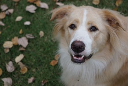 Show your support for Big Fluffy Dog Rescue by voting for Styx MacGee in the Big Fluffy Dog Rescue Candle Jar Cover Model Contest