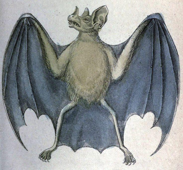 Liścionos wielki, wampir wielki /Vampyrus spectrum/ (Jardine 1833)