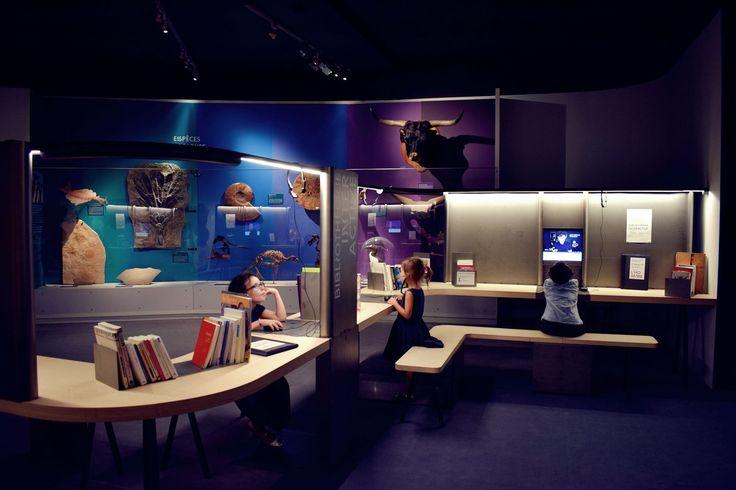 Nantes museum d histoire naturelle loire atlantique