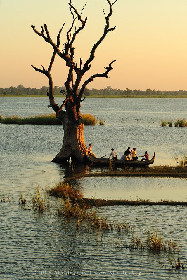 Lone tree near U Bein Bridge at Amarapura, Mandalay_ Myanmar (Burma)