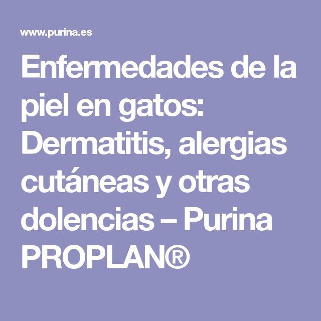 Enfermedades de la piel en gatos: Dermatitis, alergias cutáneas y otras dolencias – Purina PROPLAN®