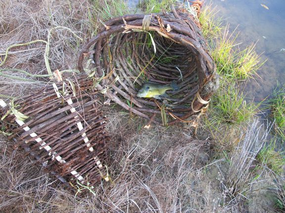 How To Make A Primitive Funnel Fish Trap That Keeps On