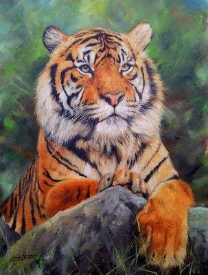Tiger Superb David Stribbling Oil Painting | eBay