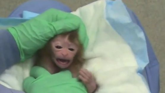 :( :( just stop!!!!!!!!!!!!!!!!! As an alumna of the University of Wisconsin-Madison's School of Medicine, petitioner is horrified to learn that her alma mater plans to conduct highly controversial and cruel experiments that will torture and kill baby monkeys. WI is one of the worst universities for cruelty to animals in their labs. Click for details and please SIGN and share petition today! Thanks.