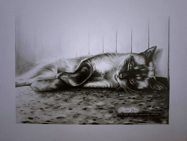 A graphite pencil drawing of Bailey the cat