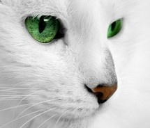 Wintergreen: she-cat. Deputy of MistClan Very beautiful, and graceful. Her fur is usually spotless. She has been helping all of the apprentices find mentors. Kin: Unknown. Crush: Frozenskies Mate: None. Kits: None.