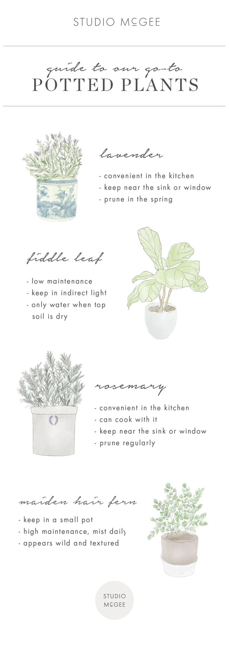 Guide to potted plants in home decor | Studio McGee Blog