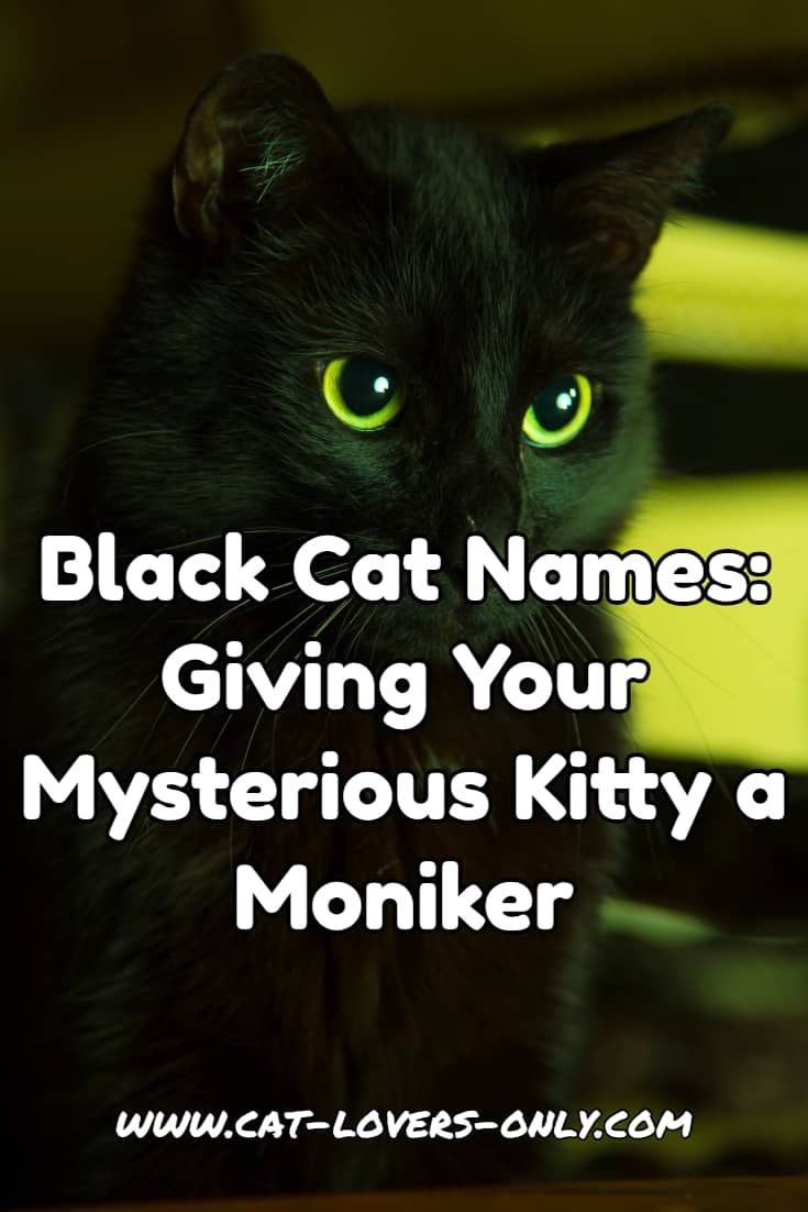 Black Cat Names Help With Giving Your Mysterious Kitty A Moniker Girl Cat Names Cat Names Cute Cat Names