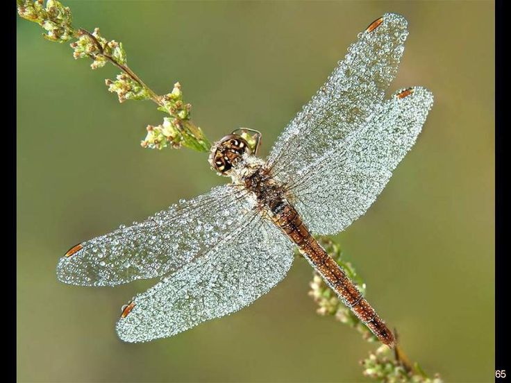 Eyes Of A Dragonfly Nature Dew Cute Macro Hd Wallpaper: 86 Best Images About The Pretty Nature On Pinterest