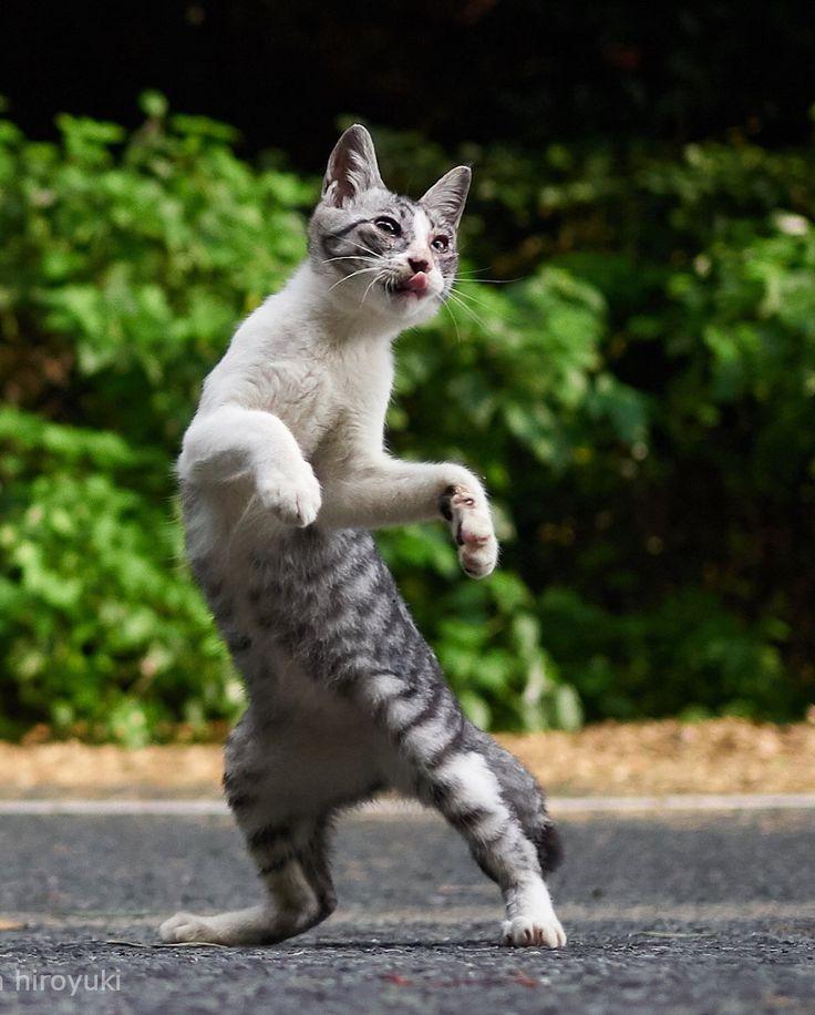 Un photographe japonais transforme les chats en véritables