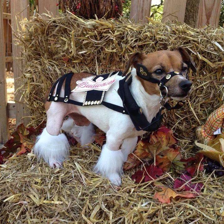 Budweiser Clydesdale Horse Halloween Dog Costume | Dog ...