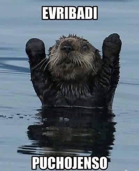 Dale al english #memes #chistes #chistesmalos #imagenesgraciosas #humor http://www.megamemeces.com/memeces/imagenes-de-humor-vs-videos-divertidos