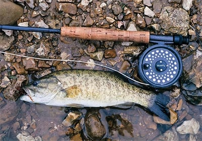 17 best images about smallmouth pattern on pinterest for Smallmouth bass fly fishing