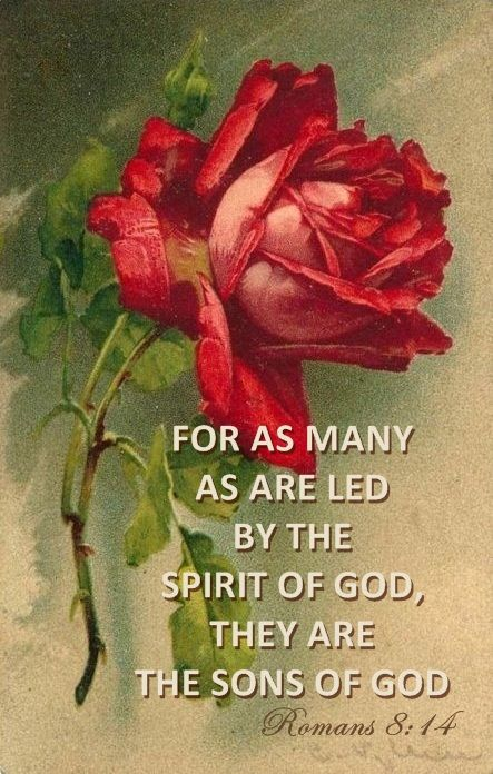 † For as many as are led by the Spirit of God, they are the sons of God. ~ Romans 8:14 (kjv)