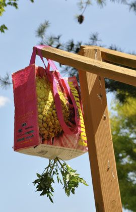 I'm going to attempt to make a hanging tomato planter out of an old reusable shopping bag.