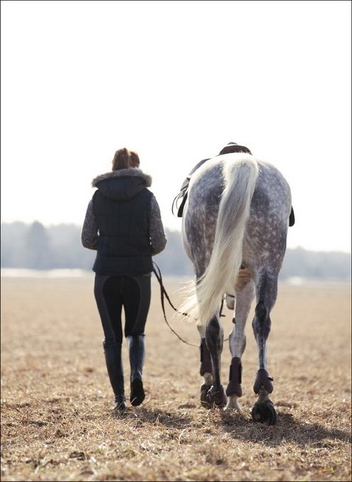 After workout walk. I love this moment, both you and the horse are tired and you feel a sense of accomplishment.