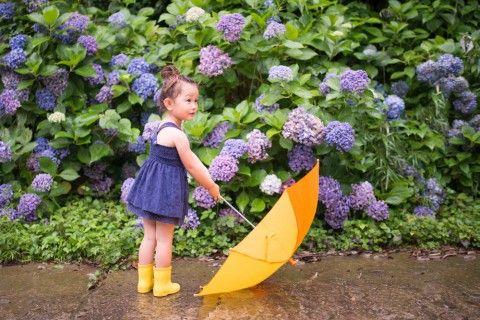 アジサイ(紫陽花)の育て方!苗の鉢植えや地植え、植え替えの方法は? - horti 〜ホルティ〜
