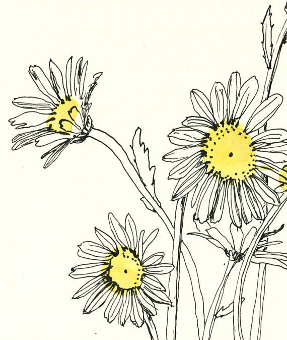 botanical drawing in color pdf