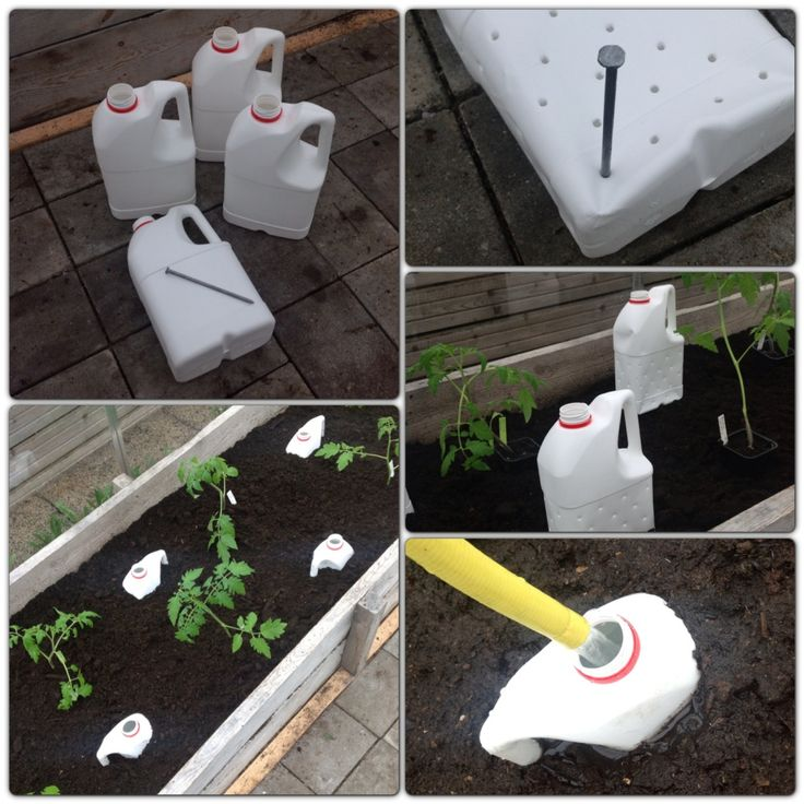 DIY watering system. Plastic containers with holes, placed in the soil between plants, facilitates watering deeper soil levels.