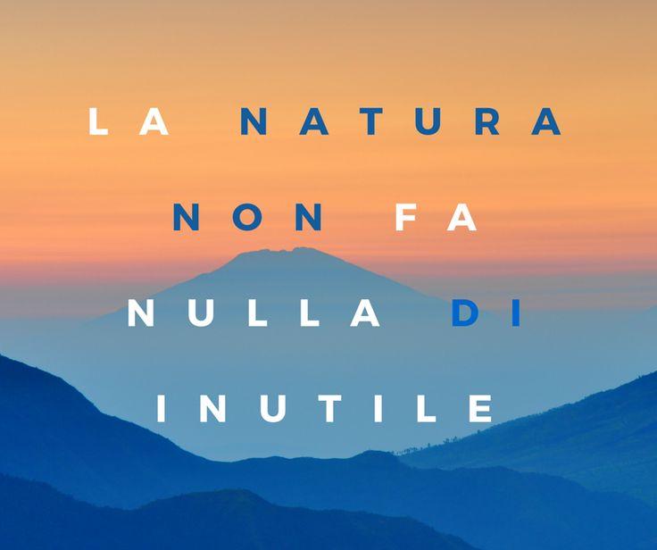 Quote by Aristotele #quotes #quote #aforismi #nature #natura #flowers #citazioni #naturequotes #Aristotele