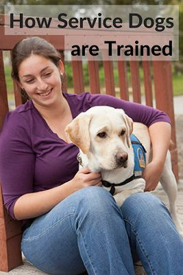 Service Dog Training at Canine Companions for Independence (Q & A) @KaufmannsPuppy