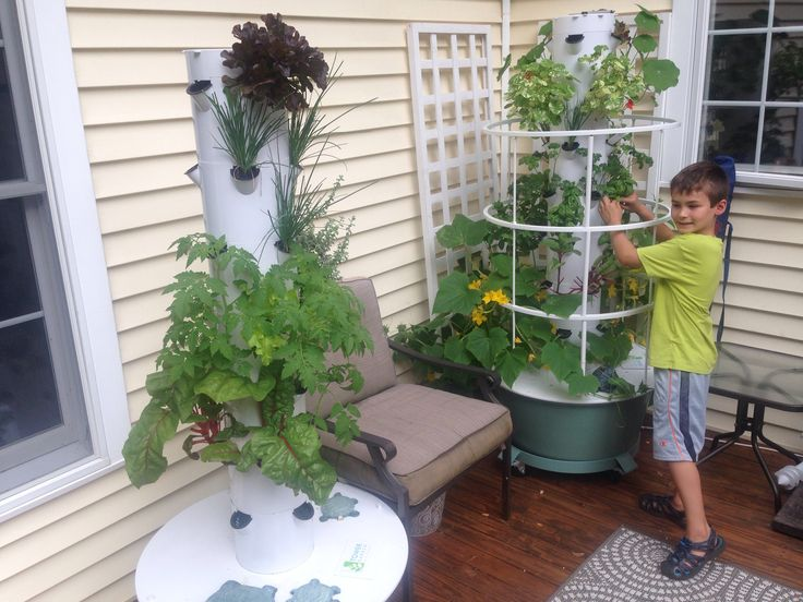1000+ Images About Tower Garden- Vertical Aeroponic