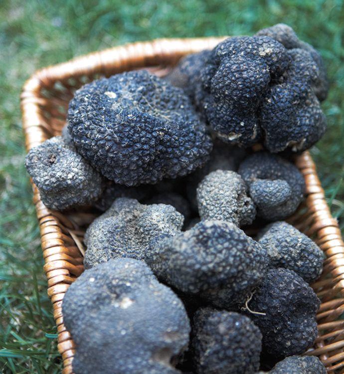 Yummy Italian black truffles. #Abruzzo #Italy