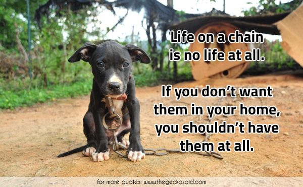 Life on a chain is no life at all. If you don't want them in your home, you shouldn't have them at all.  #animals #animalsabuse #chain #dog #have #home #life #quotes #respectanimals