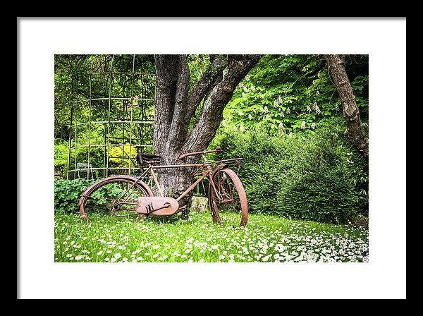 Antique Framed Print featuring the photograph Vintage Bike In The Garden by Zina Zinchik
