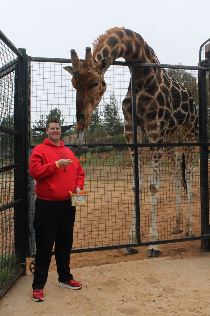Animal Encounter - Giraffe  Canberra Zoo