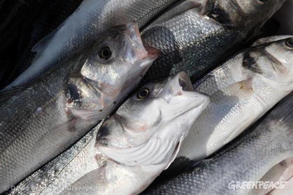 ¡Éxito! Nadie es dueño de los peces del mar | Greenpeace España