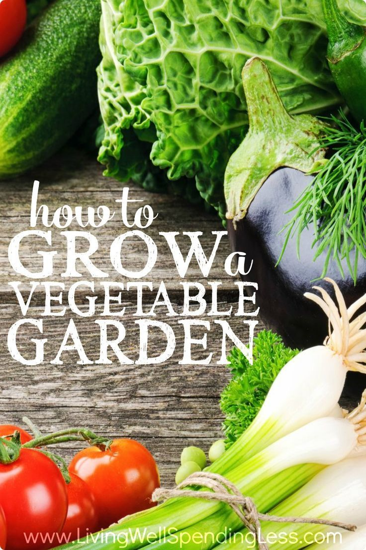 17 images about home garden ideas on pinterest for Grow your own vegetables