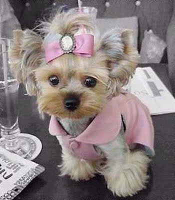 CUUUUUUUUUUUTE!!!!: Pink Coats, Little Girls, Pretty In Pink, Pink Outfit, Picnics Parties, Pink Princesses, Yorkshire Terriers, Little Dogs, Little Princesses