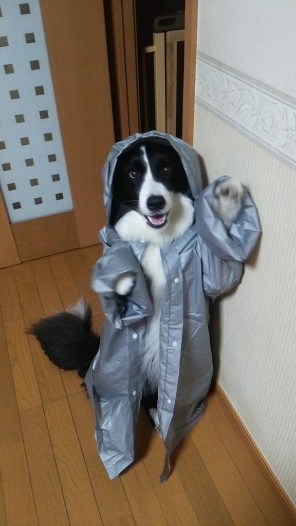 レインコートで変身!魔法使いの子供のような犬が可愛いと話題に