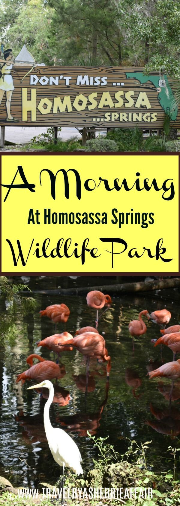 The Homosassa Wildlife Park has so much to see. There are Manatees, Florida Panther, Wolves, Bobcats, Black Bear, Birds and more.  A great place to take the kids in Florida!  The Gulfcoasts own wildlife park!  #Florida #travel #manatees #park #wildlife