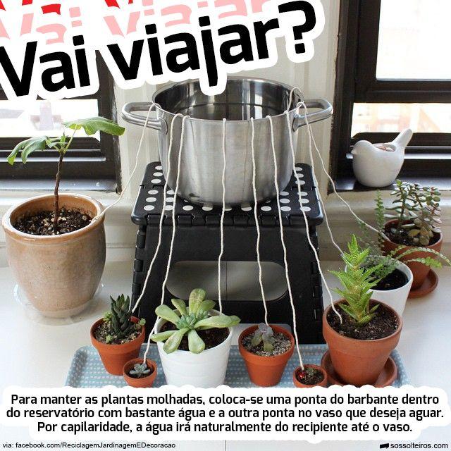 regar plantas capilaridade viajar viagem