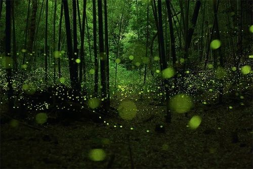 Floating Green Lights - Fireflies, Nagoya City, Japan