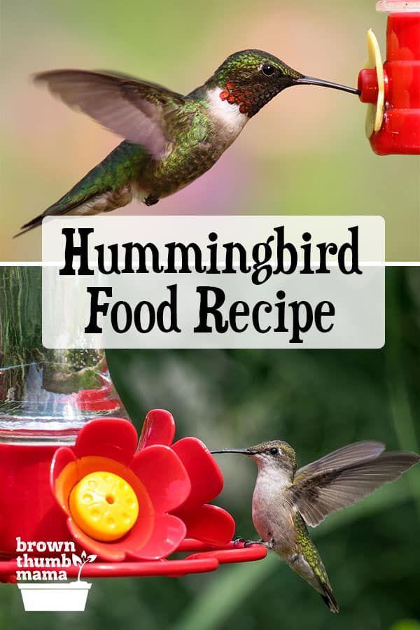 Hummingbird Food Recipe Hummingbird Food Nectar Recipe