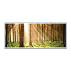 JP London PAN5250 uStrip Heavenly Sunbeams Shine in Forest High Resolution Peel and Stick Removable Wall Mural
