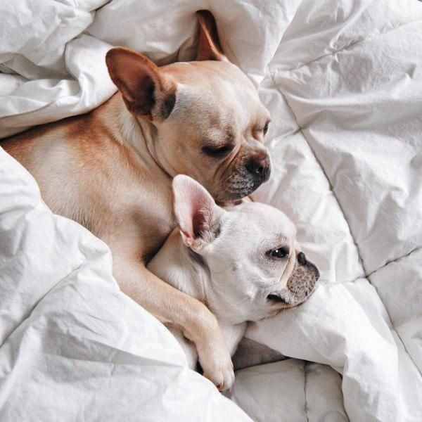 Puppies Dogs Pets Puppies Club Instagram Posts Videos