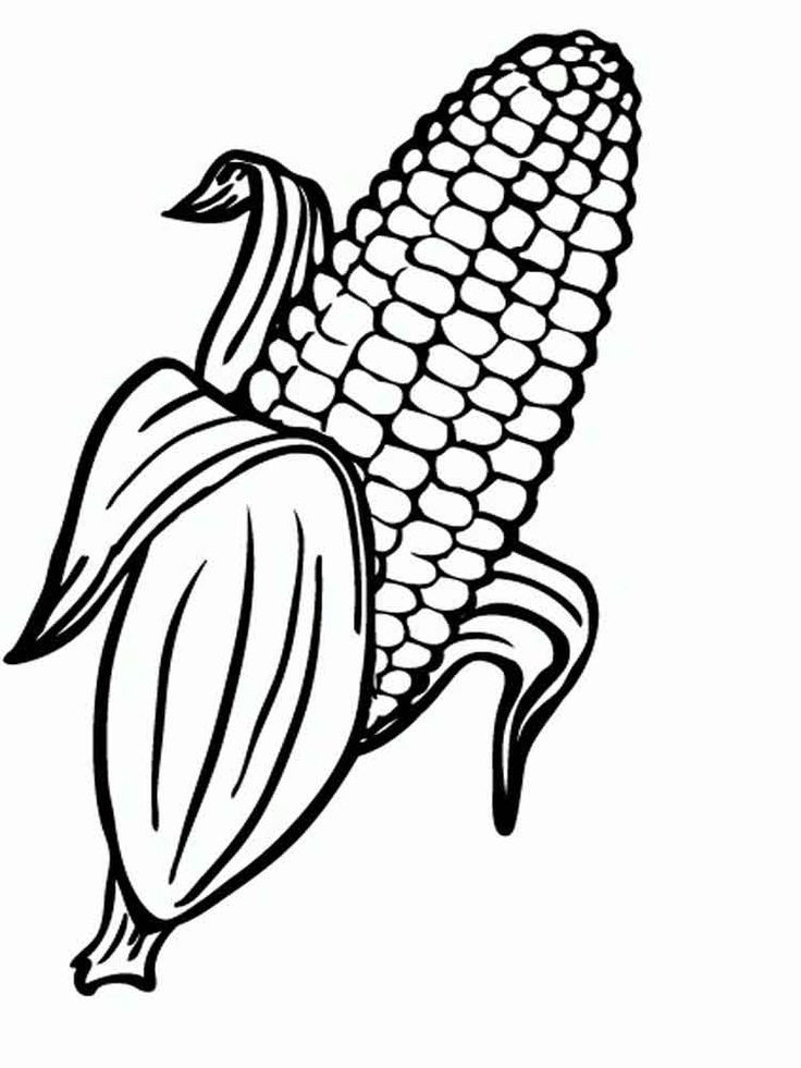 Ear of corn coloring page home sketch coloring page for Corn stalk template