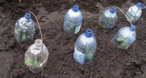 Выращивание огурцов в 5 литровых пластиковых бутылках   Дачные секреты от Виктории Радзевской   Яндекс Дзен