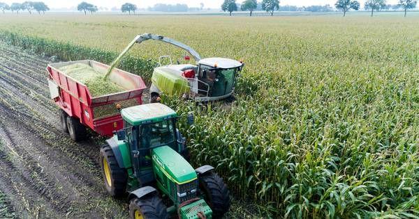 Her en der in de regio worden de omhooggeschoten maïsstengels neergehaald. De oogsttijd is aangebroken. Maïs is een van de belangrijkste producten van de landbouw in Overijssel en Gelderland. Snijmais is namelijk superfood voor de koe. Waar die 'vroeger' het vooral van gras moest hebben, is mais een steeds belangrijker ingrediënt geworden voor de melkproductie. Die opmars vindt sinds het begin van de jaren vijftig plaats. Nederlandse boeren teelden toen nog zo'n 11.000 hectare mais. Vorig…