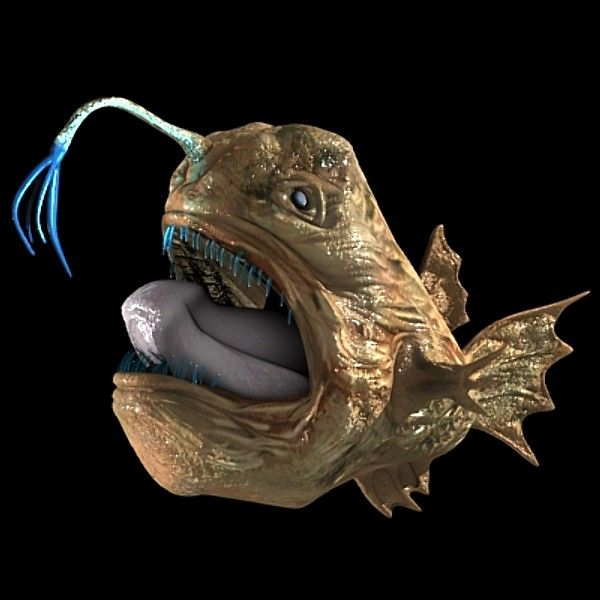11 best images about angler fish on pinterest models for What is an angler fish