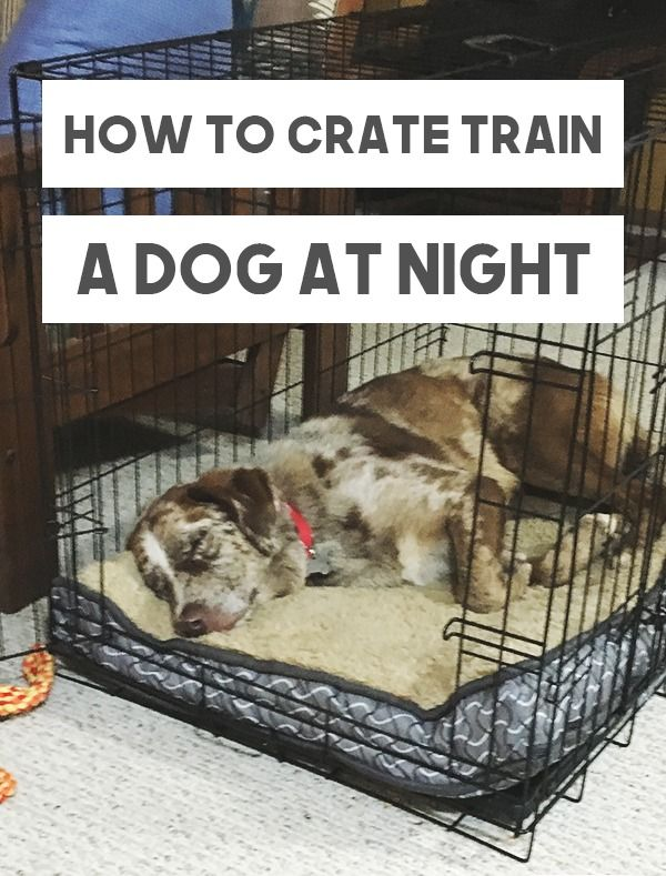 Use The Crate At Night Play With The Dog So He Is Tired Then Put