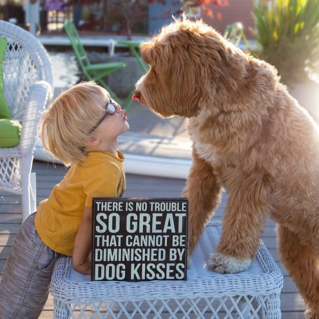 """This Labradoodle Documents His Adventures on Instagram with the Help of His """"Little Buddy"""""""