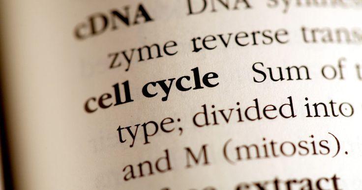 Cómo funciona un secuenciador automático de ADN. Los científicos tienen la capacidad de secuenciar la molécula de ADN, en otras palabras, pueden determinar el orden de las bases de nucleótidos en cualquier molécula dada. La secuenciación de la molécula de ADN puede ser el primero de una serie de pasos necesarios para averiguar cómo los nucleótidos específicos en una molécula de ADN interactúan ...