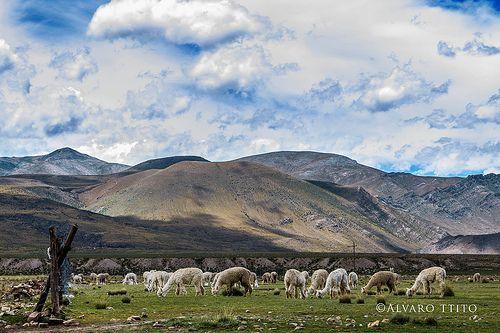 camino a Chapacoco cerca a Orcopampa | Flickr: Intercambio de fotos