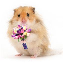 Hamsterul simpatic iti ofera un buchet de trandafiri si iti ureaza La multi ani cu fericire! http://ofelicitare.ro/felicitari-de-la-multi-ani/un-buchet-de-flori-754.html