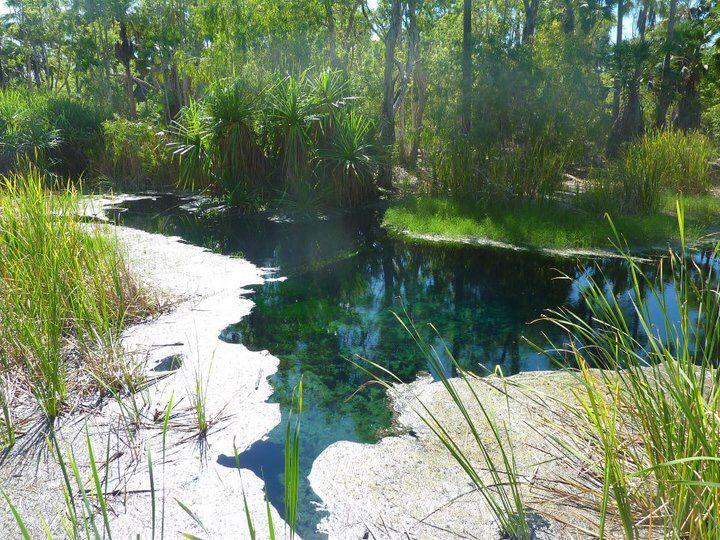Mataranka bitter springs,thermal pools,Katherine Northern Territory AUSTRALIA